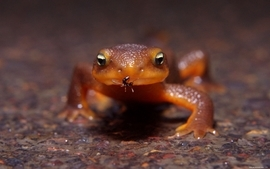 Lizards frogs macro ant wallpaper