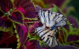 Love butterflies wallpaper
