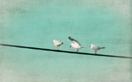 Minimalistic birds animals seagulls skyscapes wallpaper