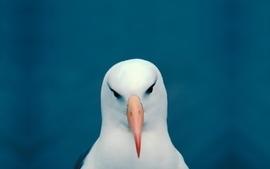 Minimalistic funny head seagulls wallpaper