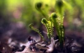 Minimalistic trees plants wallpaper