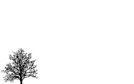 Minimalistic trees white background wallpaper