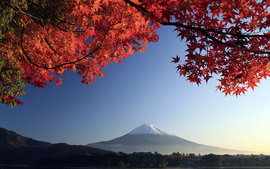 Mount Fuji Autumn Maple Japan wallpaper