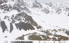 Mountains birds penguins wallpaper