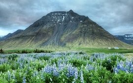 Mountains clouds landscapes nature iceland lupine wallpaper