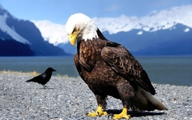 Mountains eagles bald eagles lakes wallpaper