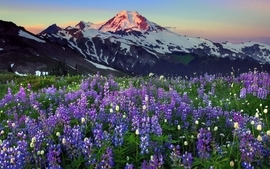 Mountains landscapes lavender wildflowers wallpaper
