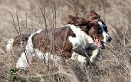 Nature animals dogs fields brown outdoors running run pets wallpaper
