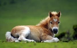 Nature animals horses baby animals wallpaper