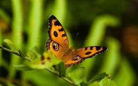 Nature animals insects wallpaper