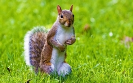 Nature animals squirrels animal world wallpaper