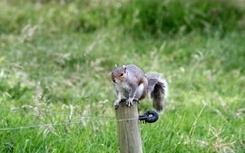 Nature animals squirrels wallpaper