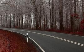 Nature autumn forest roads wallpaper