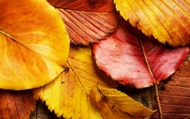 Nature autumn season leaves fallen leaves 2 wallpaper