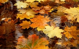 Nature autumn season leaves fallen leaves wallpaper