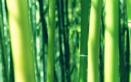 Nature bamboo depth of field wallpaper