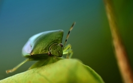 Nature beetles bugs wallpaper