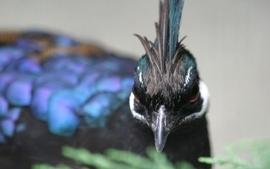 Nature birds macro wallpaper