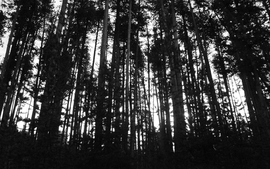 Nature black trees white grayscale wallpaper