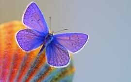 Nature butterflies 2 wallpaper