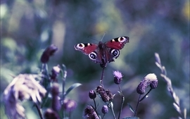 Nature butterfly macro depth of field wallpaper