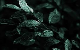 Nature dark leaves macro depth of field wallpaper