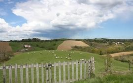 Nature fields wallpaper