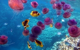 Nature fish jellyfish underwater coral reef sealife wallpaper