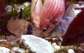 Nature fish wallpaper