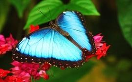 Nature flowers butterflies wallpaper