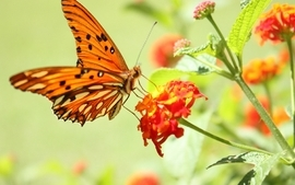 Nature flowers butterfly insects wallpaper
