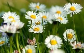 Nature flowers grass spring wallpaper