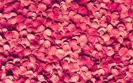 Nature flowers pink flower petals roses wallpaper