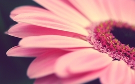 Nature flowers pink macro depth of field flower petals wallpaper