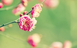 Nature flowers pink summer season deviantart blossoms depth of wallpaper