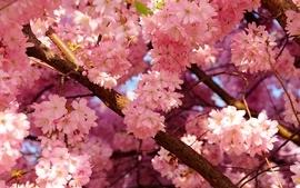 Nature flowers spring wallpaper