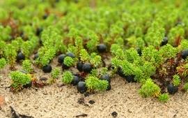 Nature fruits macro wallpaper
