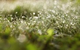 Nature grass macro 4 wallpaper
