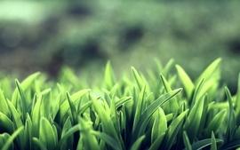 Nature grass macro depth of field wallpaper