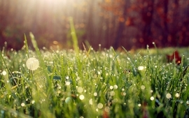 Nature grass macro morning depth of field wallpaper