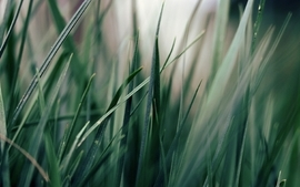 Nature grass macro wallpaper