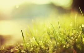 Nature grass sunlight macro wallpaper