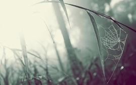 Nature grass web monochrome spiders wallpaper