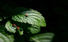 Nature insects leaves plants bugs ladybirds vegetation wallpaper