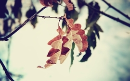 Nature leaf autumn leaves fall focus branches wallpaper