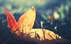 Nature leaf leaves macro wallpaper