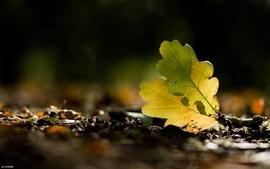 Nature leaf leaves plants fallen leaves wallpaper