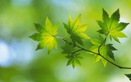 Nature leaf leaves plants wallpaper