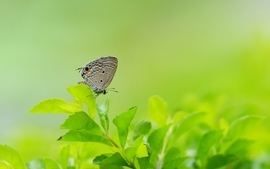 Nature leaves butterflies wallpaper