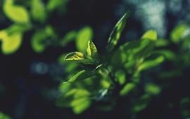 Nature leaves france macro filsru wallpaper